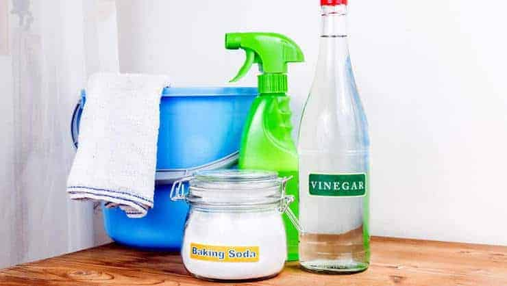 using vinegar to kill mold