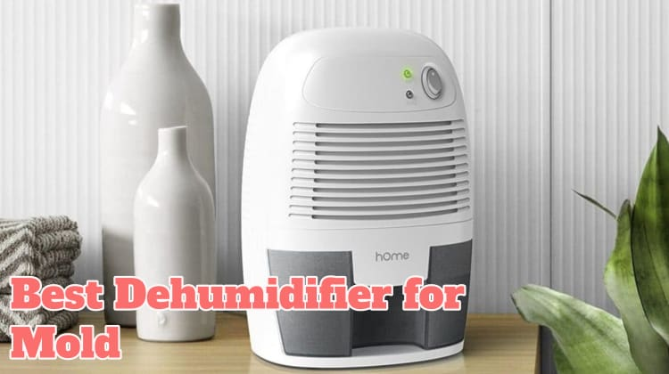 Best Dehumidifier for Mold