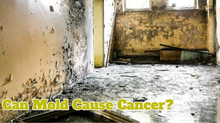 Can Mold Cause Cancer?