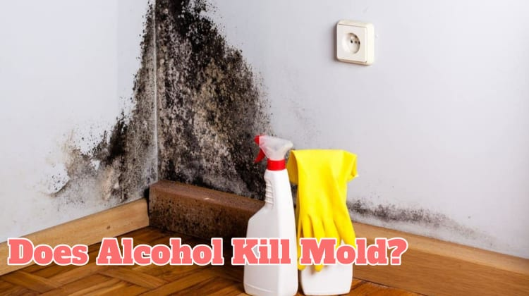 Does Alcohol Kill Mold?