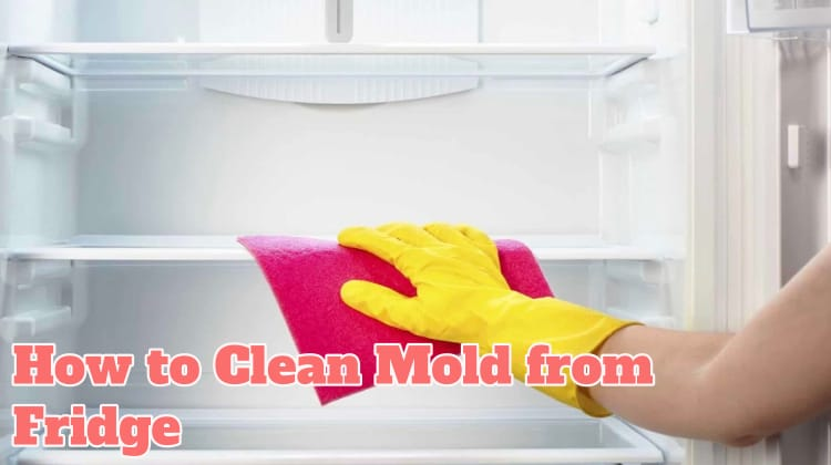 How to Clean Mold from Fridge