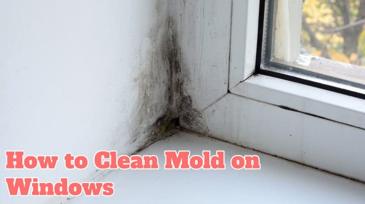 How to Inspect Mold on Windows
