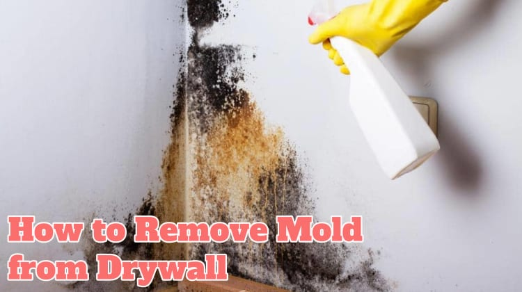 How To Remove Mold From Drywall In Two Diffe Methods