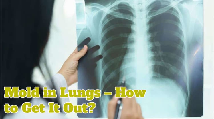 Mold in Lungs – How to Get It Out?