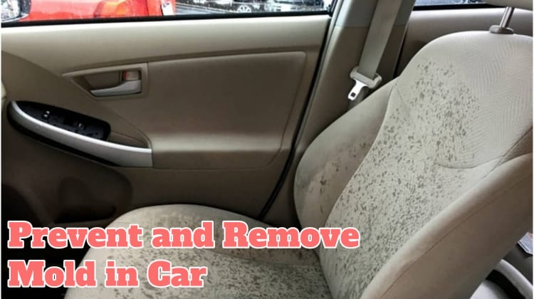 Prevent and Remove Mold in Car