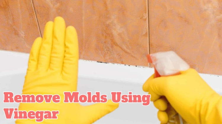 Remove Molds Using Vinegar