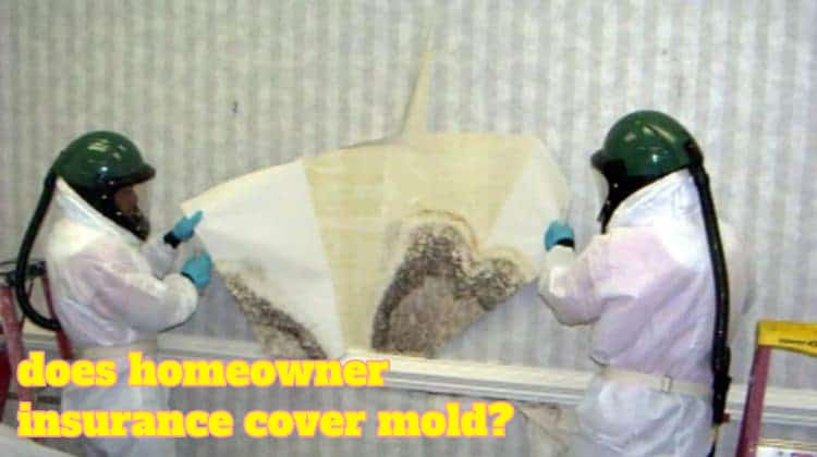 does homeowner insurance cover mold