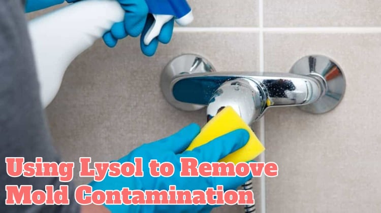Using Lysol to Remove Mold Contamination